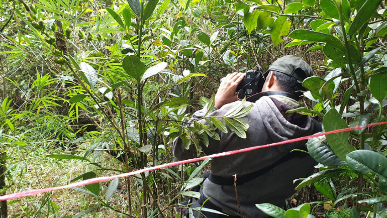 Protecting the Future of Rainforests in a Changing Climate